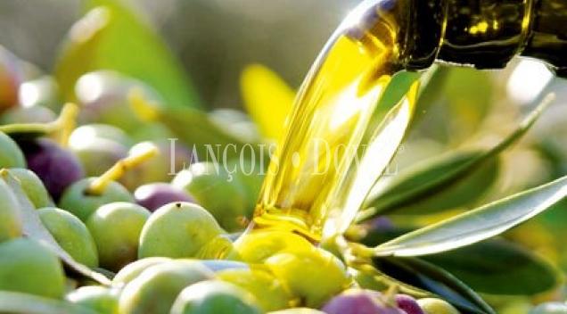 Extremadura. Trujillo. Finca olivar y lagar en venta