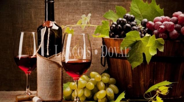 Ciudad Real. Finca vitivinícola y bodega en venta.