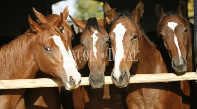 Guadalajara. Finca en venta cría del caballo y ganadería toros bravos