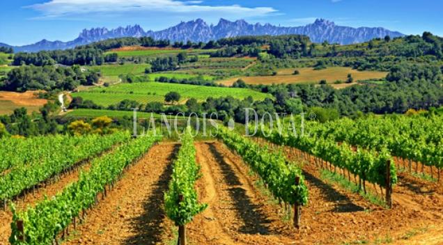 Alt Penedès. Masía casa rural y viñedos en venta. Ideal enoturismo.