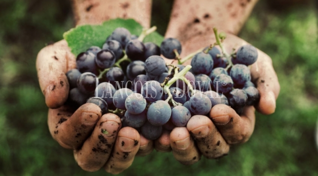 Bodega, viñedos y embotelladora de cava y vino en venta. Penedès
