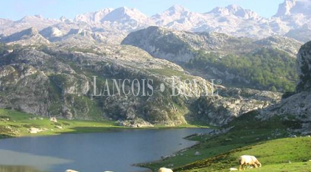 Picos de Europa. Restaurante en venta. Onís. Covadonga. Asturias