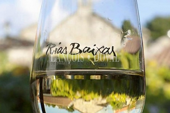 Rías Baixas. Venta bodega y viñedos ecológicos variedad Albariño.