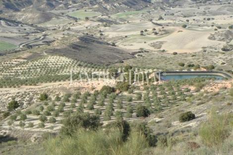 Granada. Olivar y coto de caza en venta