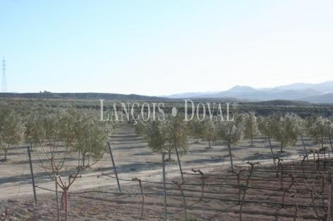 Purchena. Almería. Finca de olivos en venta.