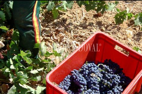 Bodega exportadora de vinos en venta. Ciudad Real.