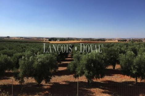 Almagro. Finca de recreo olivar y cultivo en venta. Ciudad Real.