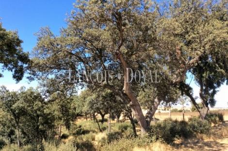 Segovia. Venta de finca de recreo, labor y caza. Explotación agrícola y ganadera.