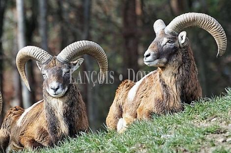 Badajoz. Venta Coto privado de caza mayor 500 ha. Extremadura finca y dehesas.