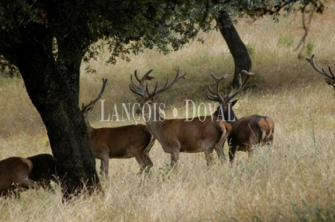 Finca de caza mayor y menor en venta. Sierra de Córdoba.