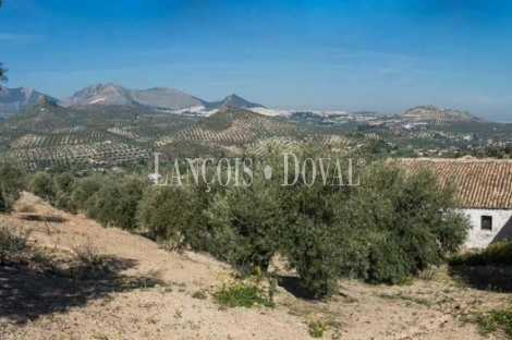 Jaén. Finca olivar en venta. 73 Ha de regadío junto a la capital.