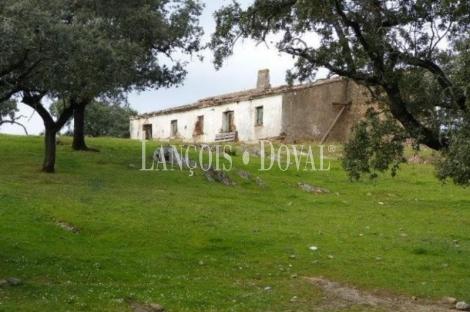Sevilla. Coto de caza y dehesa ganadera en venta. 183 ha. Sierra Norte.