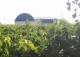 Tomelloso. Ciudad Real. Bodega en plena producción y viñedo en venta.