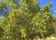 Almansa. Fincas y bodega ecológica en explotación. Viñedos, olivar y almendros.