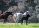 Cáceres. Dehesa en venta. Ideal ganadería. Navalmoral de La Mata. Extremadura.