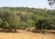 Venta finca ganadera y de caza mayor en la Sierra de Ubrique . Cádiz.