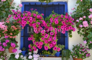Provincia Sevilla. Casa Rural en venta.