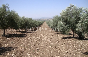 Antequera. Málaga. Finca olivar en venta.